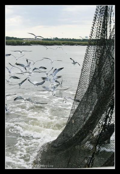 Shrimping 8